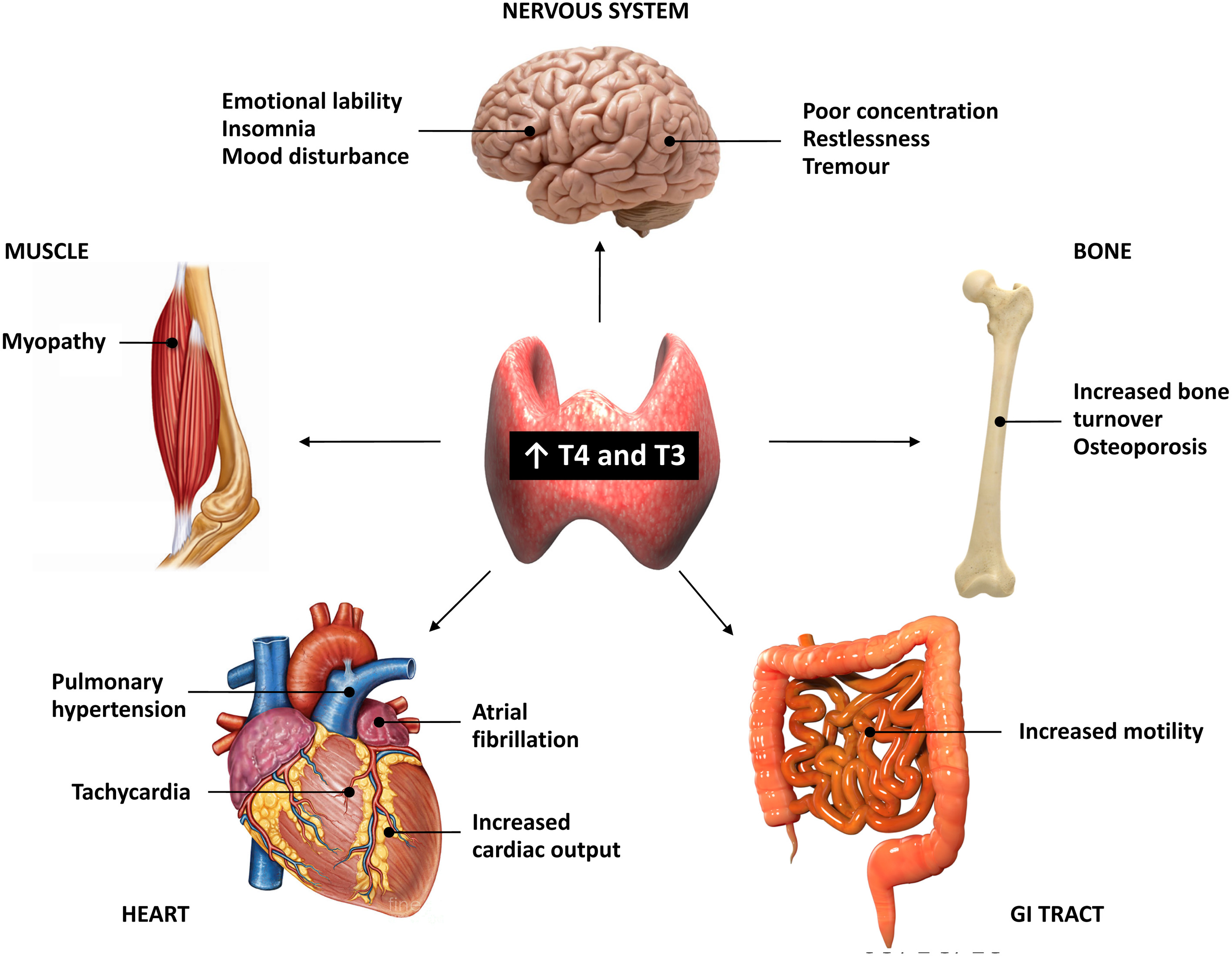 human physiology review cardiac output venous return and their regulation quick review notes